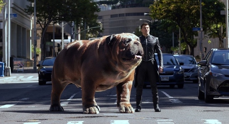 This is what Lockjaw, the giant bulldog from Marvel's ...