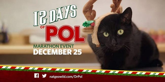 Exclusive: Watch the trailer for The Incredible Dr. Pol Christmas marathon on Nat Geo WILD