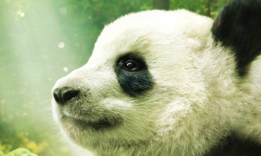 watch the pandas official trailer supercute with some