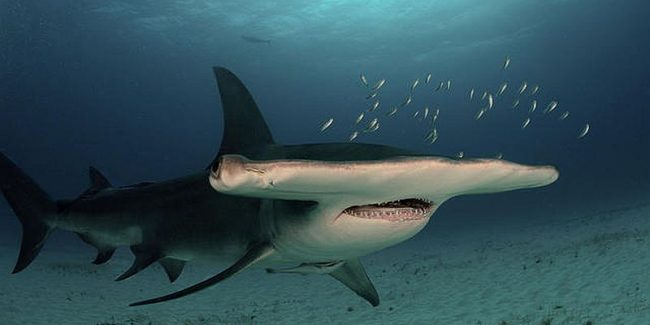 Shark Week partner-palooza list: Hammerheads, cupcakes, contests, cool shark airplanes and more!