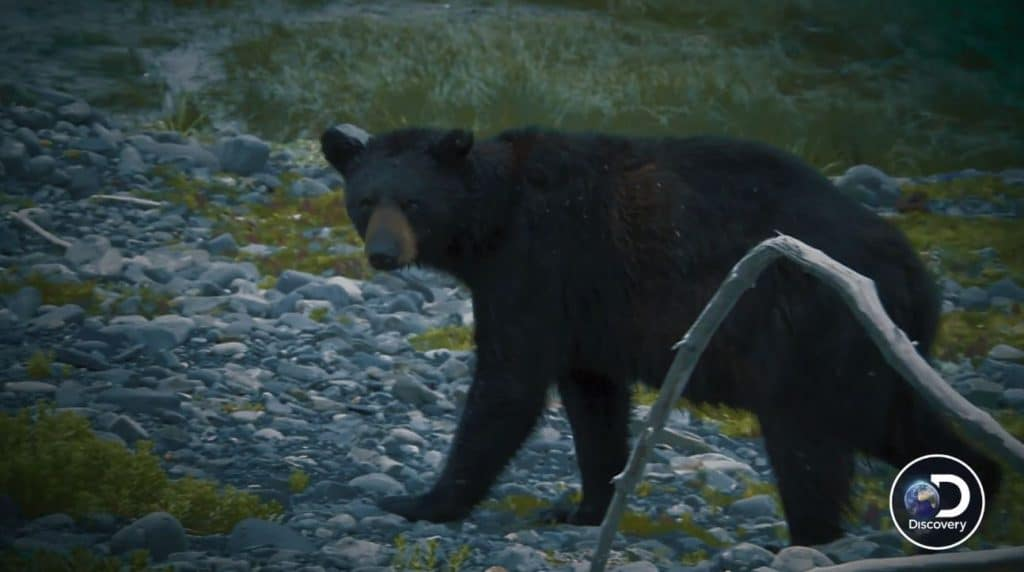 Mama bear is quite protective and will rush and attack anyone who dares come near her