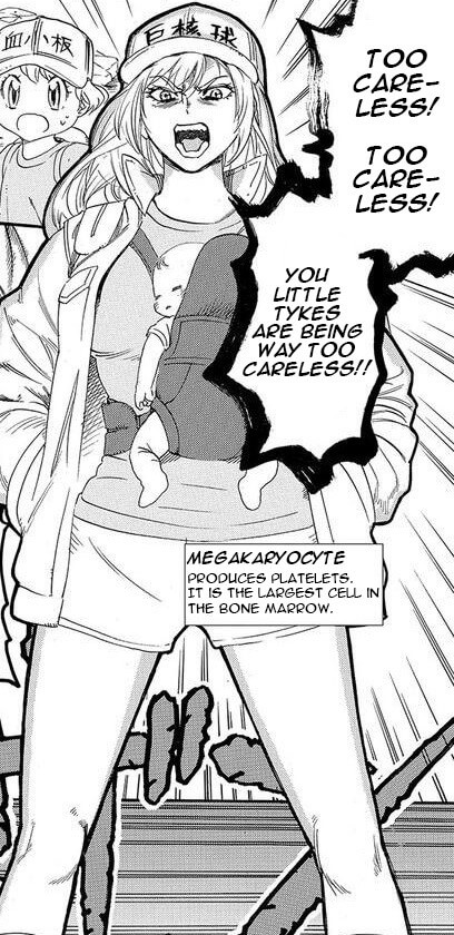 Cells At Work Megakaryocyte Manga Chapter 26