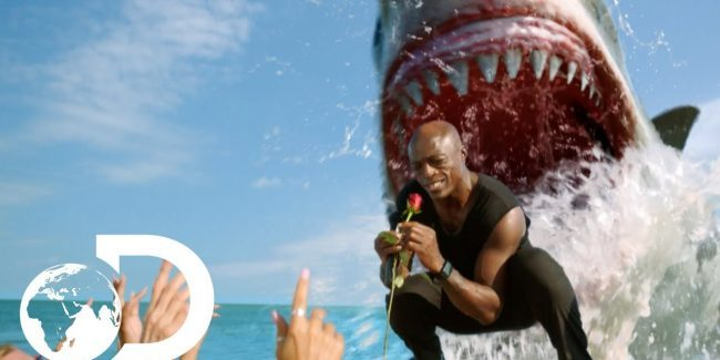 Discovery's Seal 'Kiss from a Rose' Shark Week spot earns coveted News and Doc Emmy