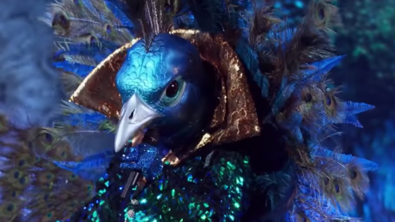 who is the peacock on the masked singer fans think they know who it is