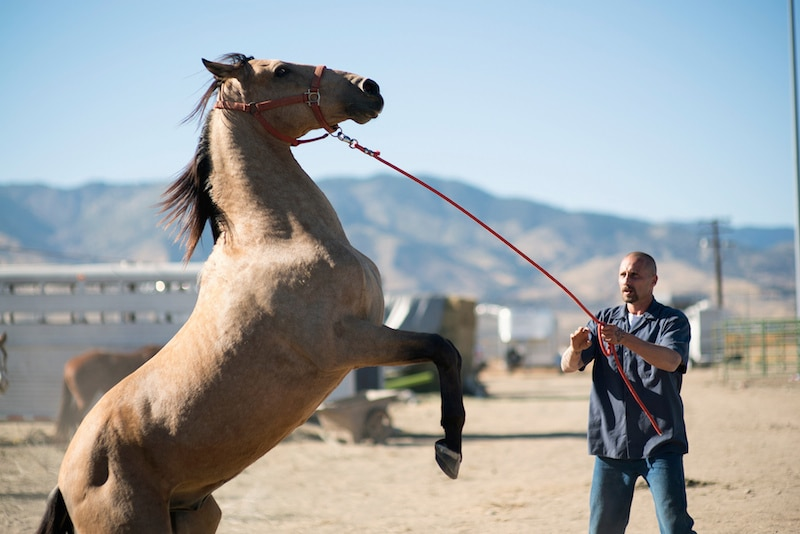 46666560161 fe747708c5 k - For a movie called The Mustang, there's not enough horseplay