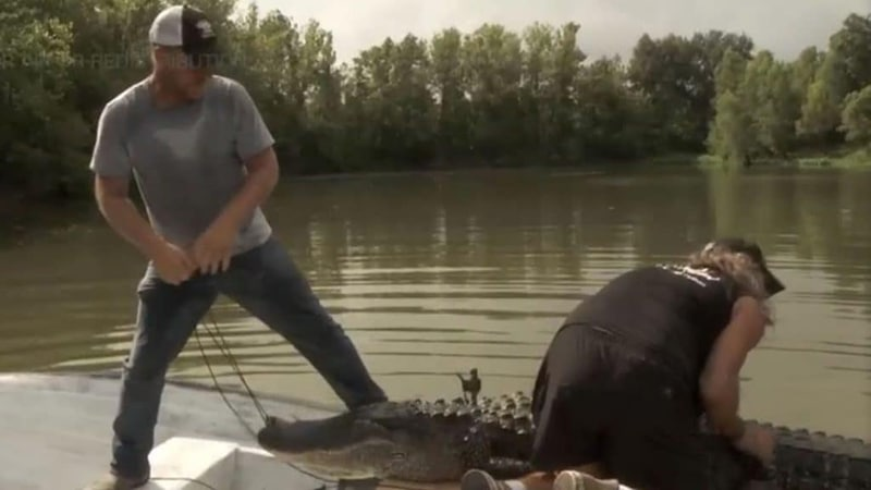Swamp People recap: Sasquatch eludes, Big Head Junior nabbed and Joey takes the win with Bulldozer