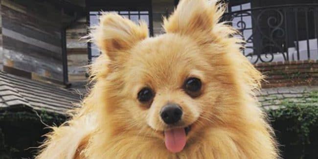 Logan Paul's dog Kong Da Savage