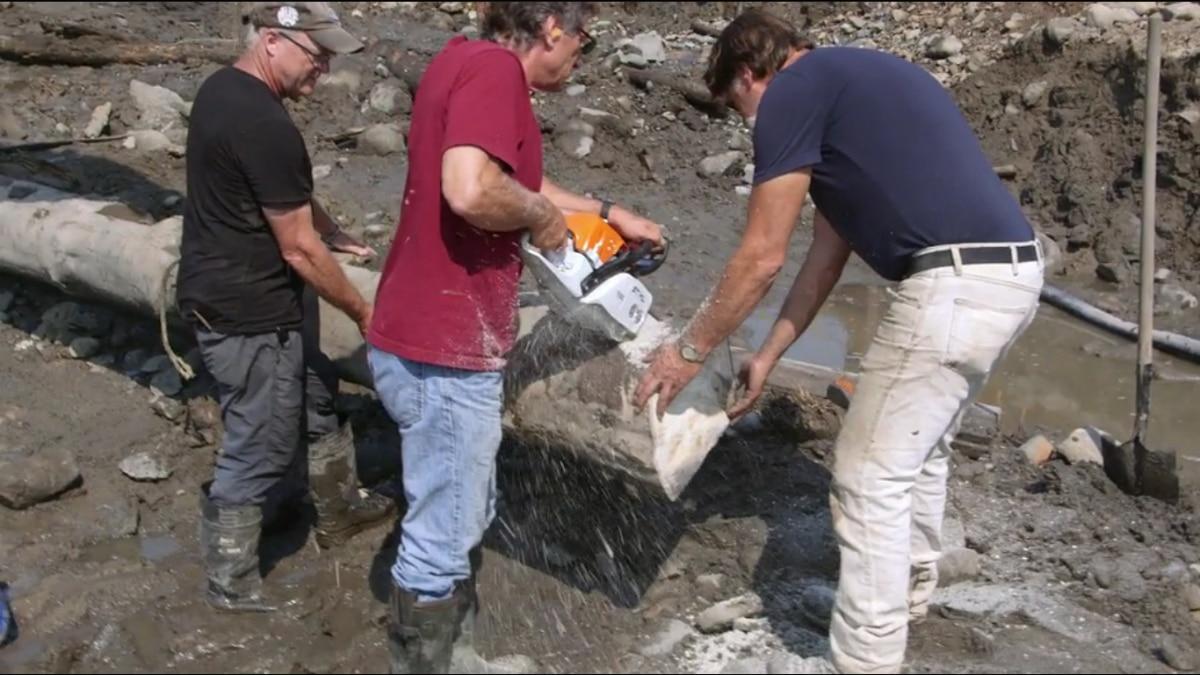 Marty Lagina cuts a log found underground on Oak Island