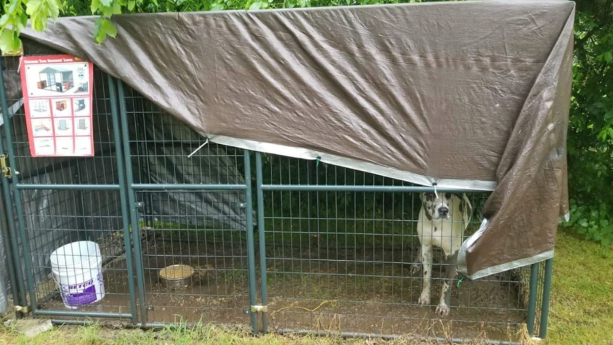 mackenzie mckee dog abuse
