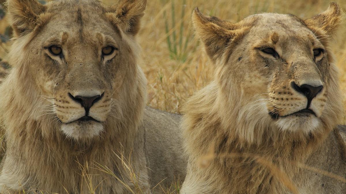 Savage Kingdom on National Geographic.