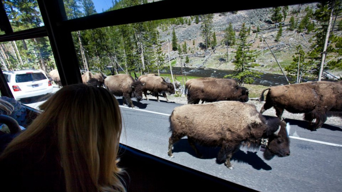 Our bison jam with Nat Geo a few years back at Yellowstone. Pic credit: Monsters & Critics