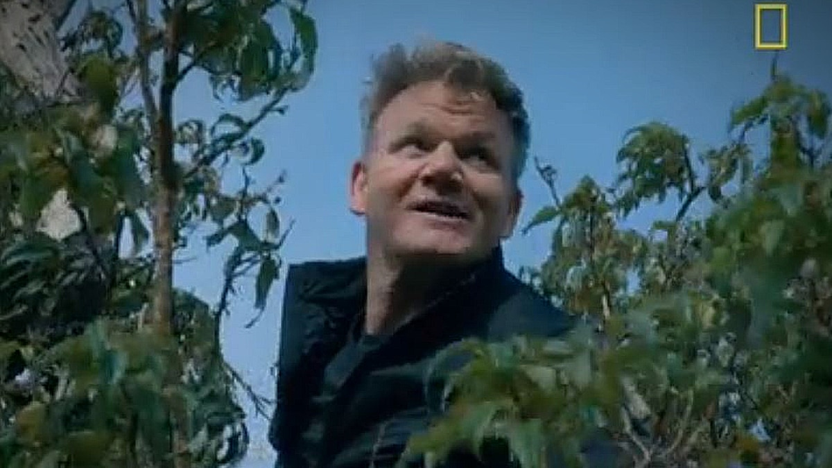 Gordon scales a Fuchsia berry tree because they are that good. Pic credit: NGC