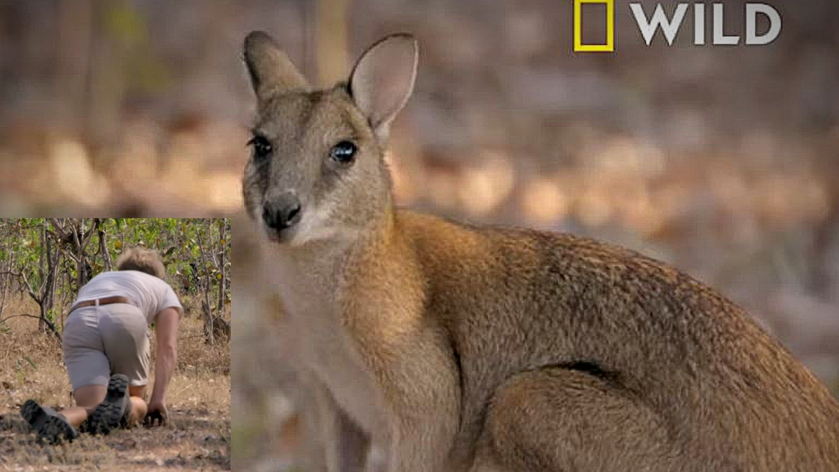 Jack is really trying hard to make friends with a Kanga on Out There with Jack Randall. Pic credit: Nat Geo WILD