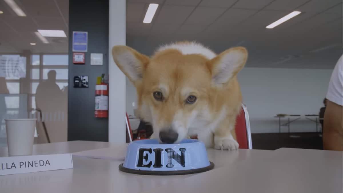 Ein the data dog