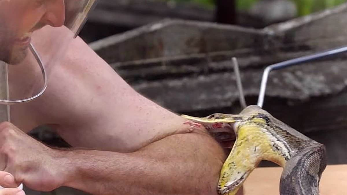 python use - Kings of Pain goes to the nonfiction TV extreme: Pythons and tarantulas attack hosts on new HISTORY series