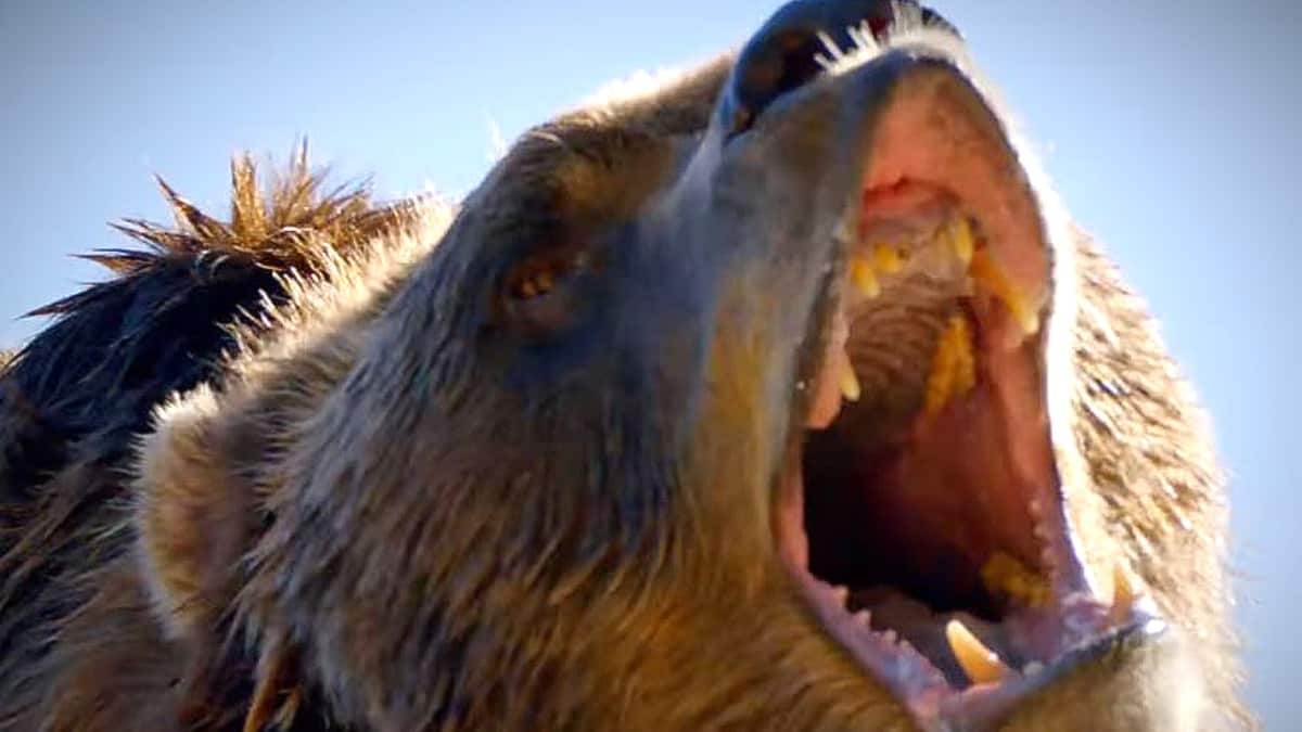 We wonder what Bart's breath smells like, let's ask Christina! Pic credit: Discovery
