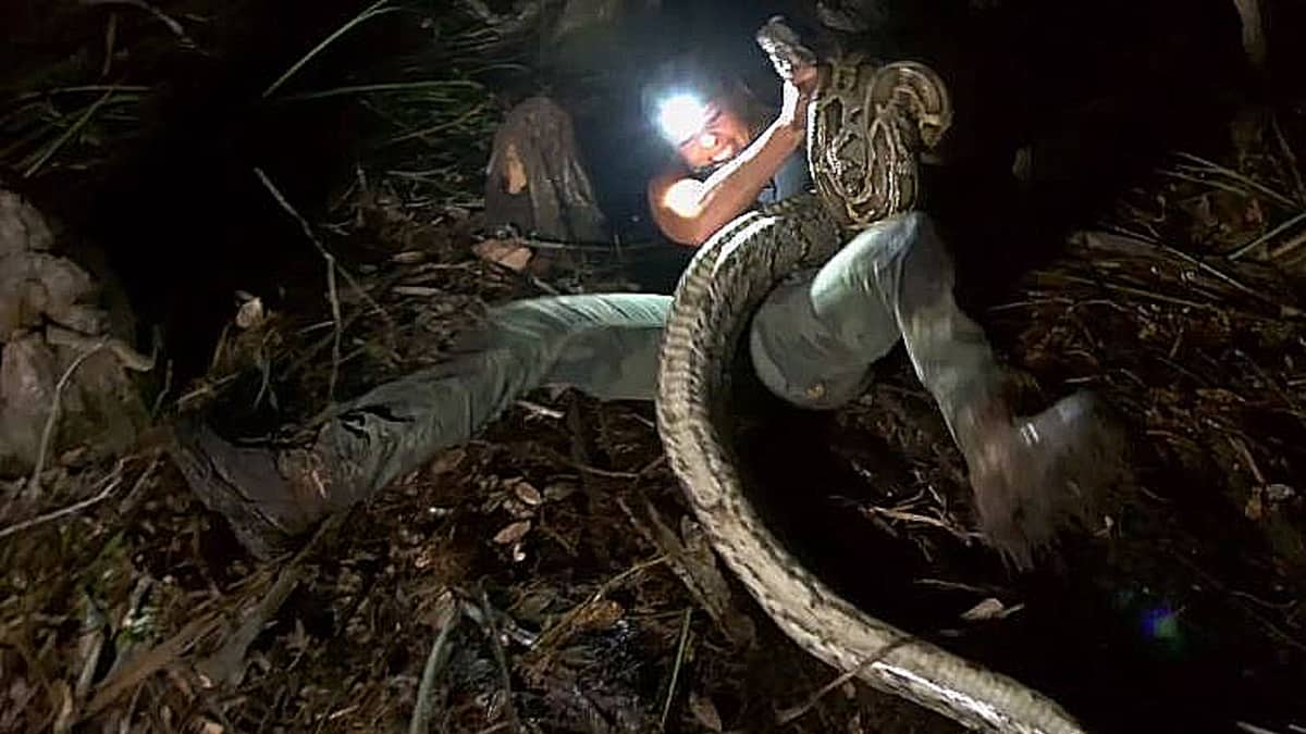 The frightening moment the snake knocked Brittany over and then proceeded to attack, it is wild footage! Pic credit: Discovery