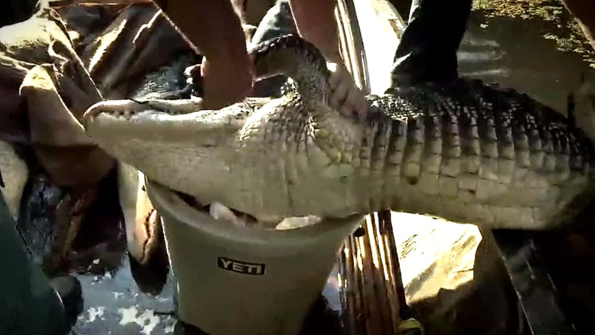 Who knew Yeti made gator-to-go buckets? This is Don's marshmallow handiwork. Pic credit: History.