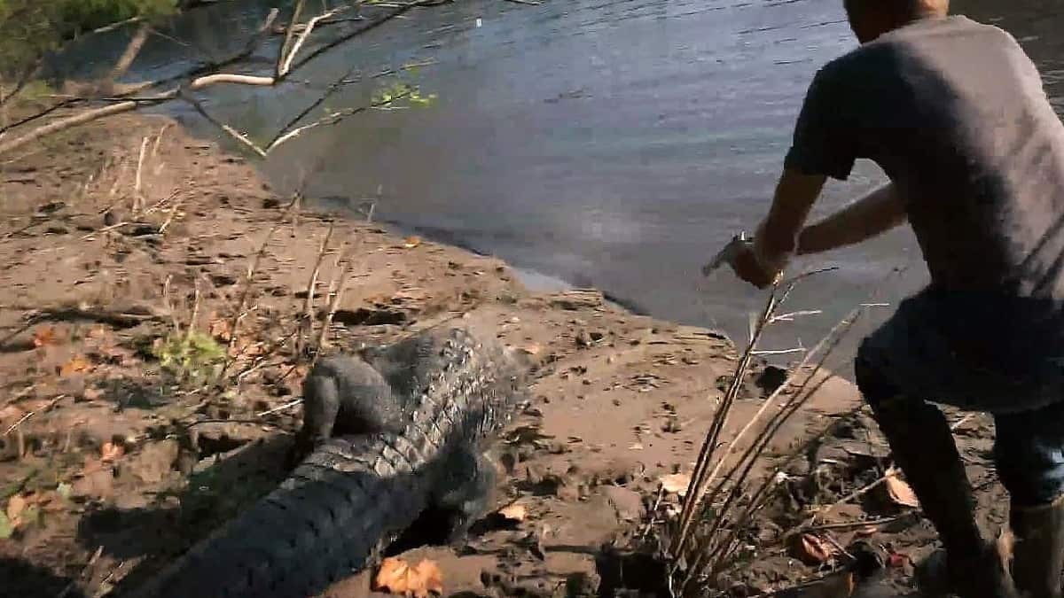 Insanity as this not large man goes after a live 12 footer with a pistol! Pic credit: History Channel