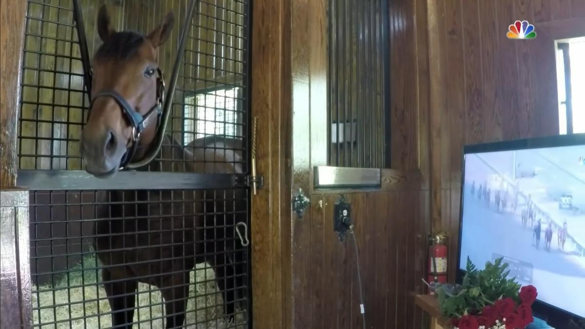 Triple Crown winner American Pharoah watches footage of himself winning the 2015 Kentucky Derby in his stall
