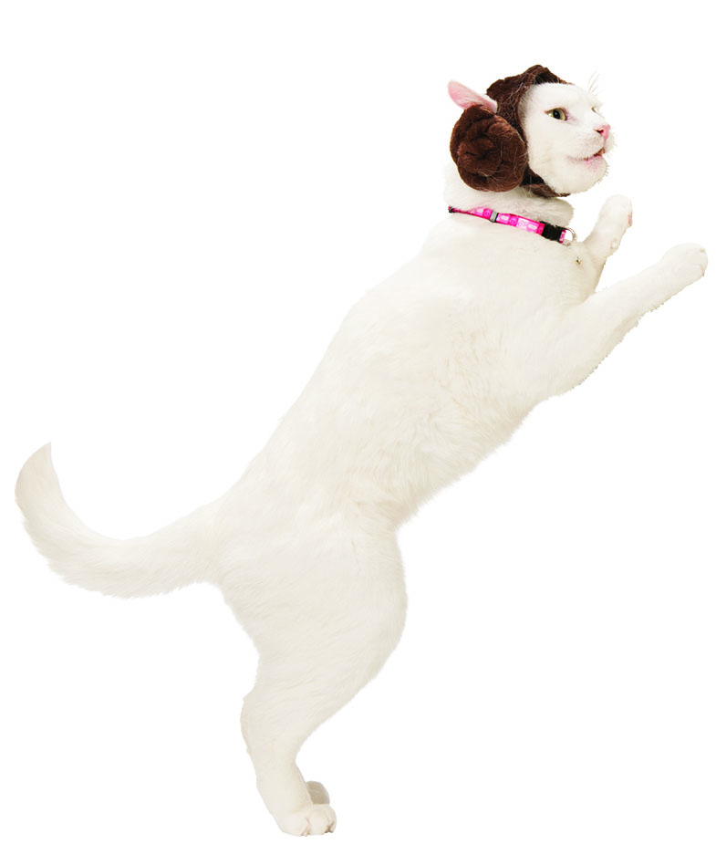 Princess Leia cat headpiece