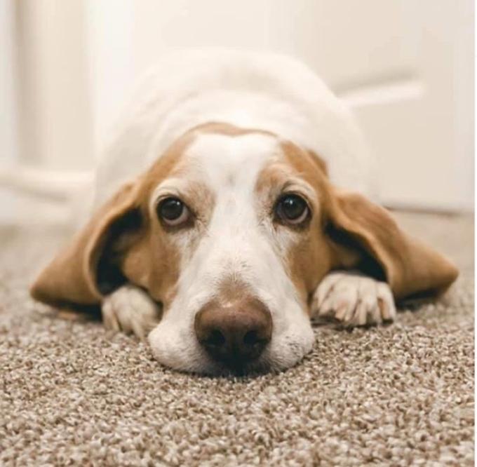 Danielle Dodd's dog Henry