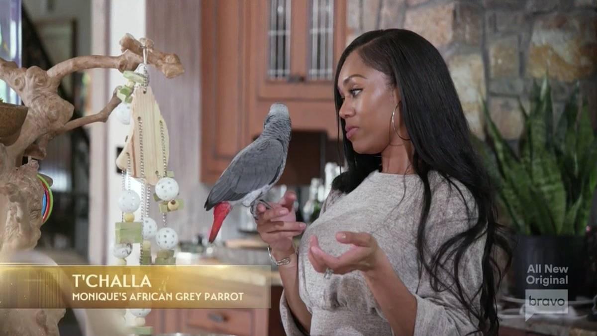 Monique Samuels holds her bird T'Challa while filming RHOP.