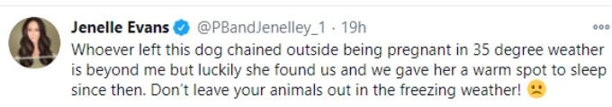 Jenelle Evans shames pregnant pit bull's owner in Twitter post