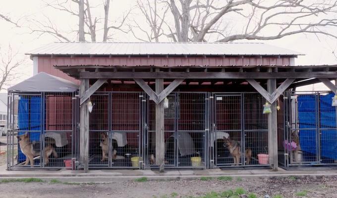 puppy-mills-brandon