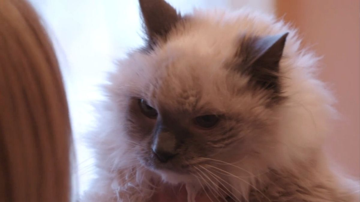Stephanie's cat Cooper