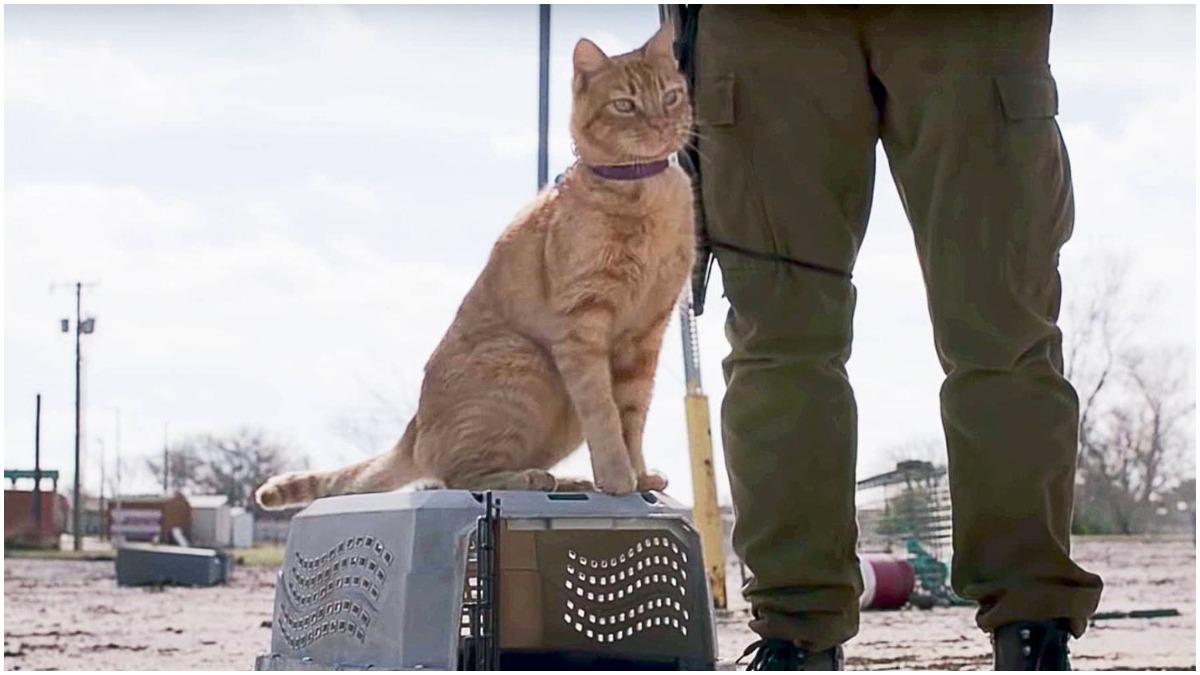 Skidmark the cat, as seen in AMC's Fear the Walking Dead
