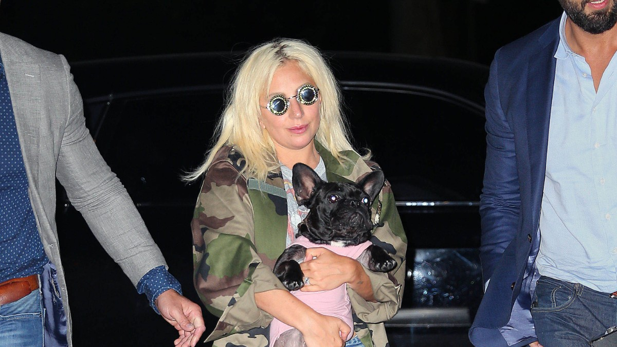 Lady Gaga pictured out on the town with one of her dogs